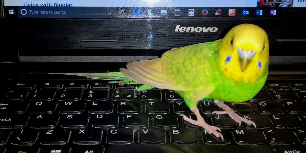 Vincent explains how his budgie helps him manage bipolar