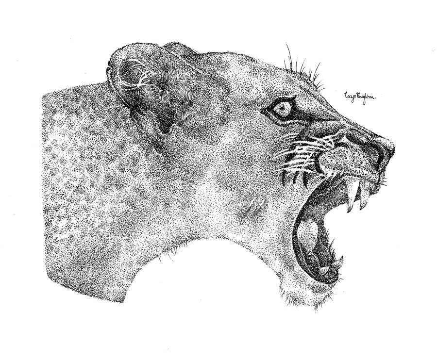 Dotwork Pen and Ink Lioness by Cerys Knighton - A Bipolar UK 80/20 submission