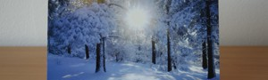 Winter Sunrise Christmas Cards